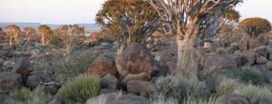 SAC_Namibia-bushveld
