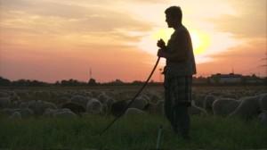 186625340-vigilance-sheep-farming-sheferd-staff-rod
